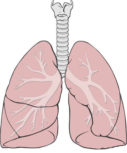 chimney smoke damaged lungs